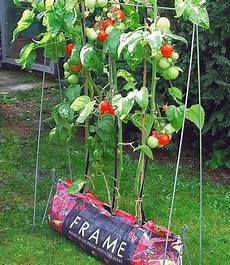 rankgestell plant grow jetzt kaufen baldur