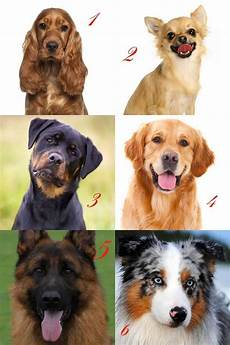 welcher hund passt zu mir test welcher hund passt zu mir seite 2