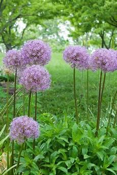 fleur exterieur sans entretien plantes d ext 233 rieur sans arrosage 15 photos pour faire