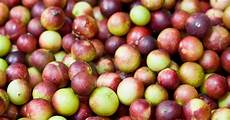7 evidence based health benefits of camu camu