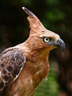 Ivanildosantos Gambar Burung