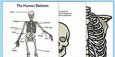 human skeleton large display cut outs teacher made