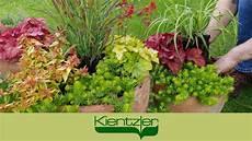 pflanze mit i herbstzauber winterharte stauden f 252 r balkon und garten