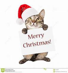 cat carrying merry christmas sign image of claus funny 37404880