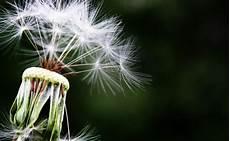 allergia alle graminacee alimenti vietati allergia alle graminacee come comportarsi a tavola