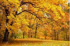 Fall Backgrounds Gold