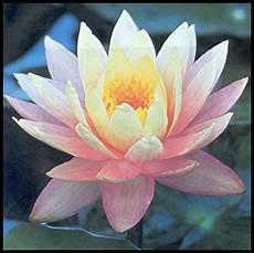 fiore di loto significato giapponese simboli della cultura giapponese