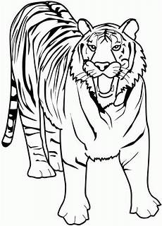 ausmalbilder tiger kostenlos malvorlagen zum ausdrucken