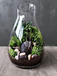 Carafe Moss Terrarium Gift Set Live Houseplants Office