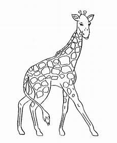 giraffe malvorlagen kostenlos zum ausdrucken