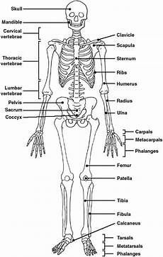 human skeletal system diagram labeled the world s catalog of ideas