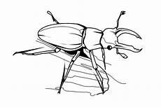 20 besten ideen ausmalbilder insekten beste wohnkultur