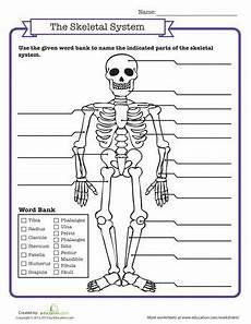 science worksheets human skeleton 12216 skeletal system quiz 3rd grade science ideas science worksheets human science human