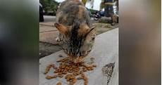 Pck Bantu Kucing Jalanan Sepanjang Pkp Harian Metro