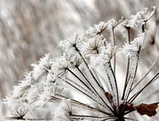 frostige zeiten auch f 252 r die pflanzen frankenberg eder