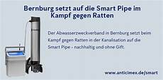 Rattenbekämpfung Ohne Gift - news rattenbek 228 mpfung in bernburg anticimex