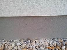 Ameisen In Der Fuge Der Boden Fassade Bauforum Auf
