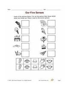 worksheets on the five senses 12651 pin on senses