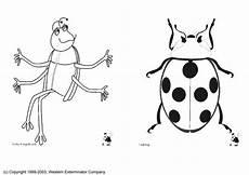 disegno da colorare insetti disegni da colorare e