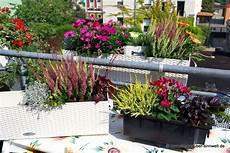 kräuter anpflanzen wohnung winterharte b 228 umchen f 252 r balkon eukalyptus b umchen