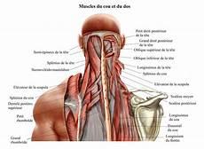 soulager les cervicales en dormant douleur cervicale torticolis et ost 233 opathie ost 233 opathe