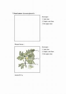 Gambar Pohon Tomat Dan Bagian Bagiannya Berbagai Bagian