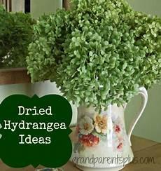 getrocknete hortensien dekorieren glenda s world your own oak leaf hydrangea