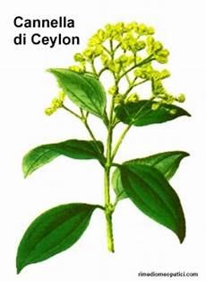 canella fiore cannella carciofo rimedi omeopatici