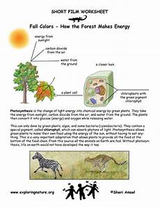 photosynthesis experiments worksheets 12671 lets solve eds past papers page 9 css forums
