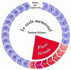 cycle menstruel calcul les dates d ovulation