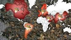 sterben bienen im winter das gro 223 e bienensterben w wie wissen ard das erste