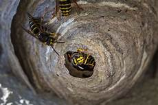 how to get rid of a wasp nest confirm a kill