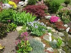 Kiesbeet Pflanzen Gestalten - garden with small shrubs and plants rock garden
