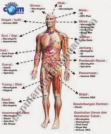 Struktur Dan Fungsi Anatomi Tubuh Manusia Ppt