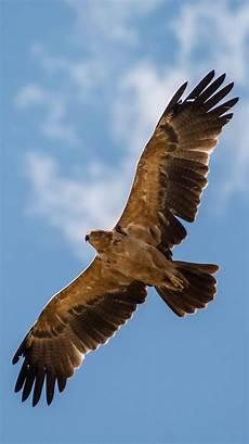 iphone black eagle wallpaper hd eagles iphone wallpapers top free eagles iphone