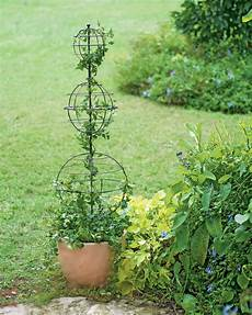twist topiary frame topiary forms spiral topiary wire frame outdoor projects landscaping