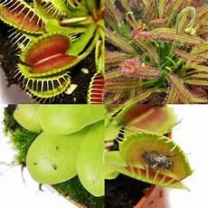 starter set fleischfressende pflanzen 3 pflanzen ebay