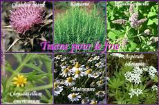 plante pour le foie tisane pour la foie marrakech herboristerie