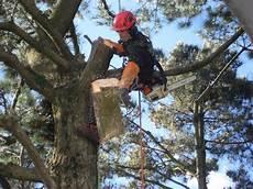 devis elagage arbre temp 234 te pensez 224 233 laguer vos arbres eric jacob
