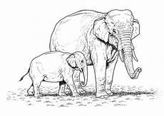 Ausmalbilder Elefant Gratis Malvorlagen Zum Ausmalen Ausmalbilder Elefant Gratis 2