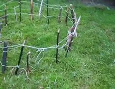 Image result for A Rabbit Snare Setting