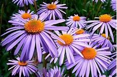 20 Beliebte Garten Blumen F 252 R Fr 252 Hling Sommer Herbst