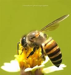 Koleksi Gambar Serangga Bersama Bunga Dari Saya Unikversiti