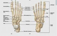 Hardin Buruhi Makalah Quot Anatomi Rangka Manusia Quot