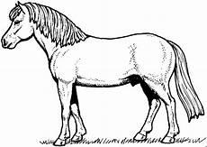 pferd auf einer weide ausmalbild malvorlage tiere
