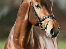 ausmalbilder pferde norweger norweger pferde f 252 r bilder und spr 252 che f 252 r
