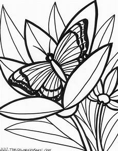 free rainforest coloring pages at getcolorings free