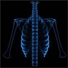 dolore alla gabbia toracica schiena gabbia toracica spina dorsale e cranio illustrazione di