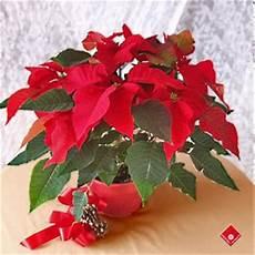 Fleur De Noel Tout Regard La De No 203 L