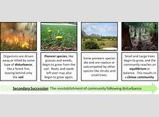 things that cause secondary succession